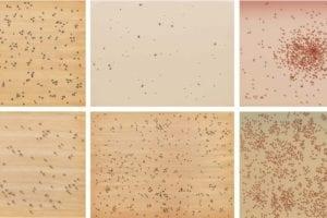 Insects 1972 Medium: The complete portfolio of six screenprints
