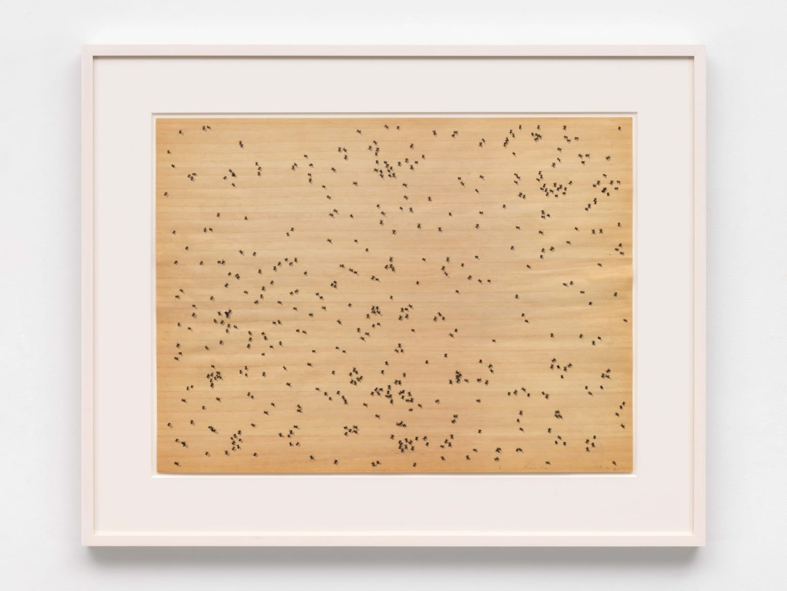 Insects, 1972 Medium: The complete portfolio of six screenprints