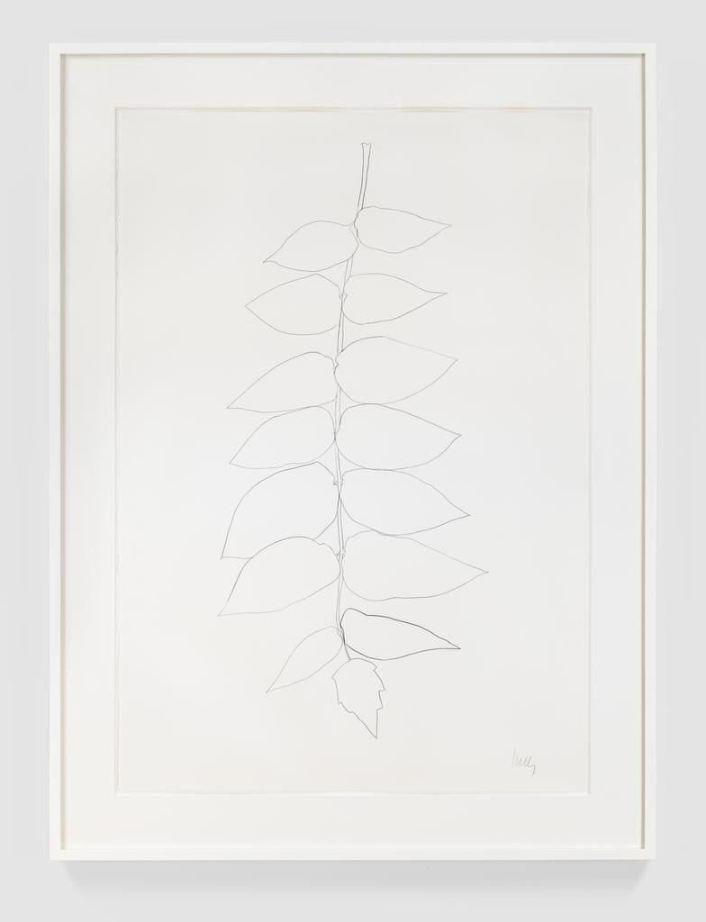 Ailanthus Leaves II, 1966