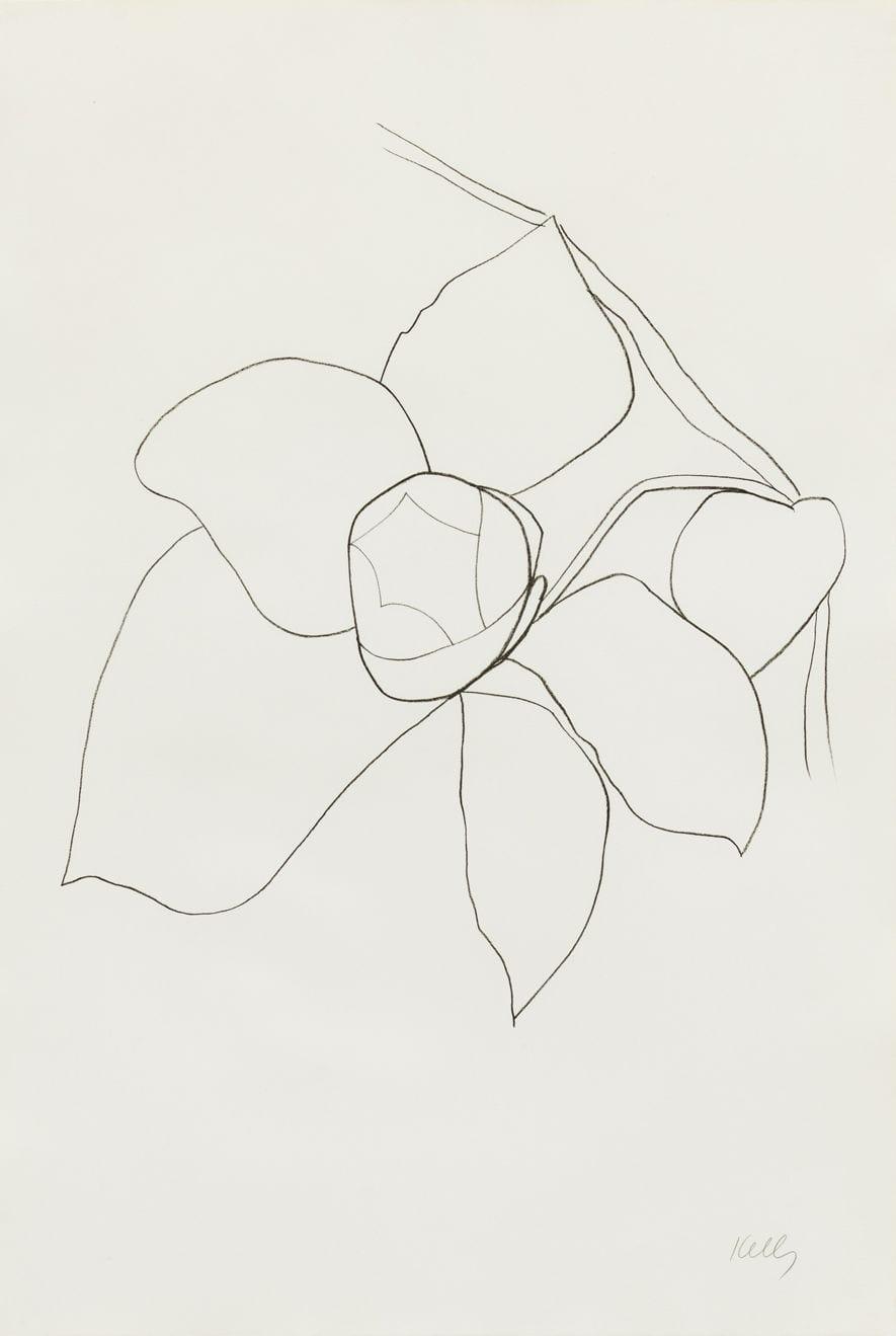 Camellia II, 1964-65