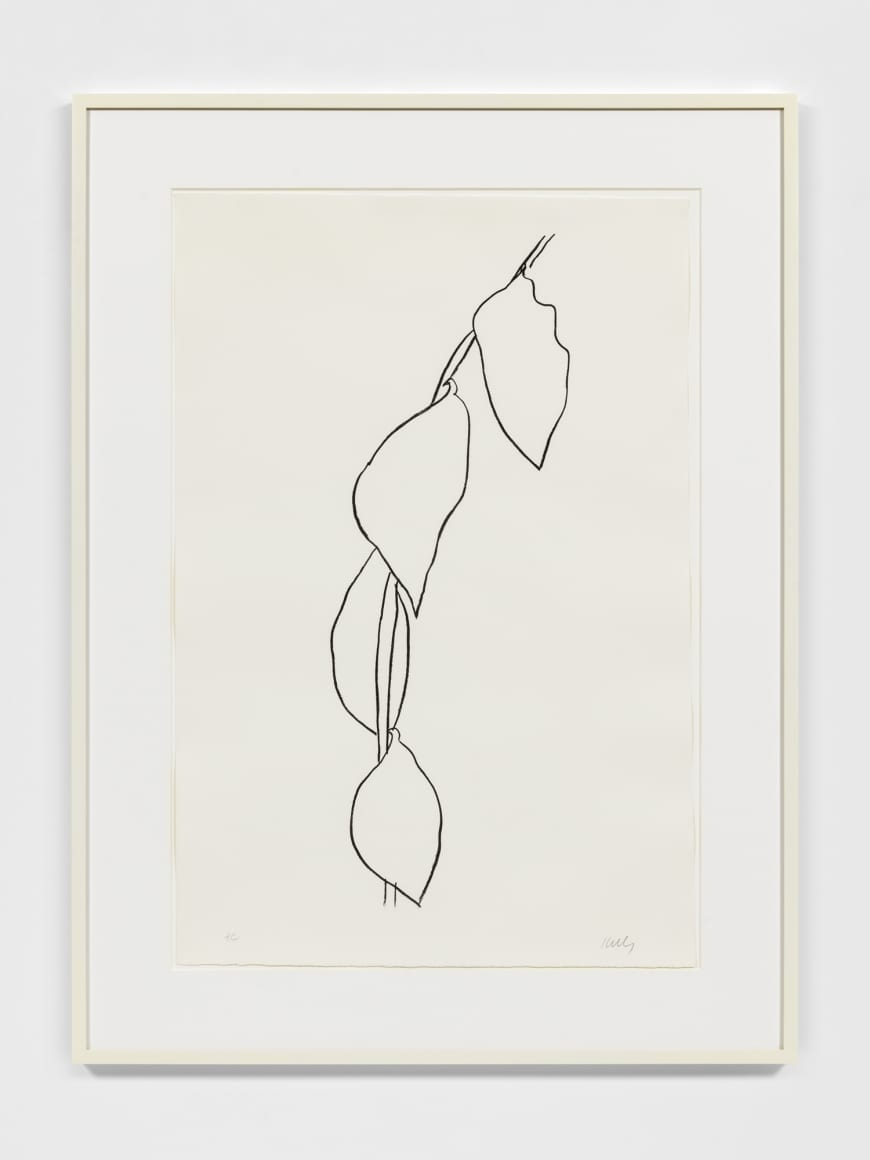 Lemon Branch, 1965-66