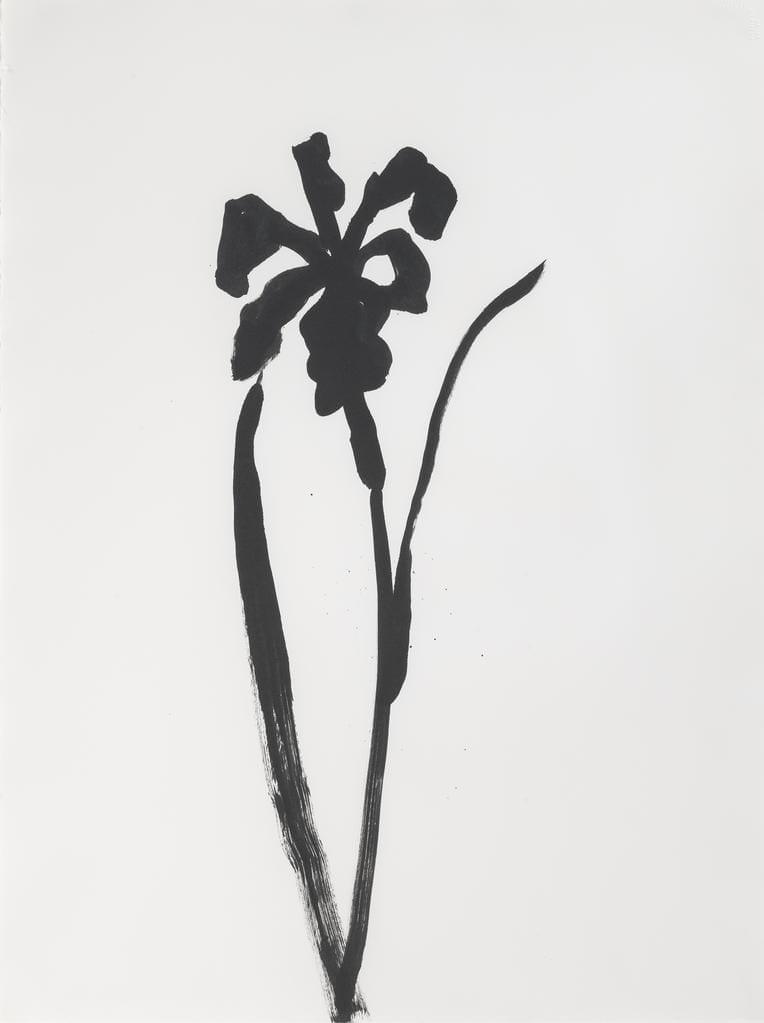 Siberian Iris, 1989
